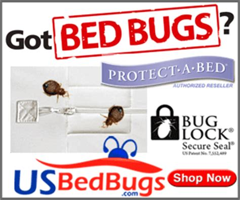 does baby powder kill bed bugs bed bugs can kerosene kill bed bugs