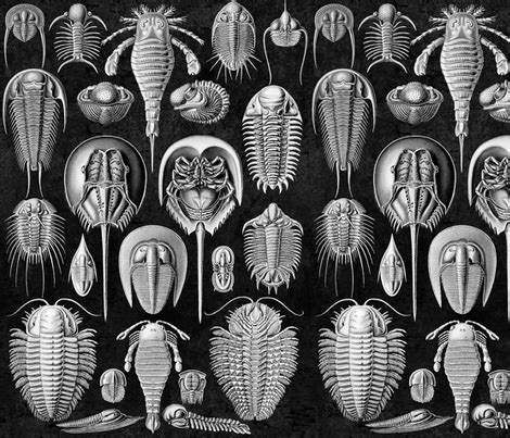 Horseshoe Crab Mollusks Ernst Haeckel Mollusk fabric ...