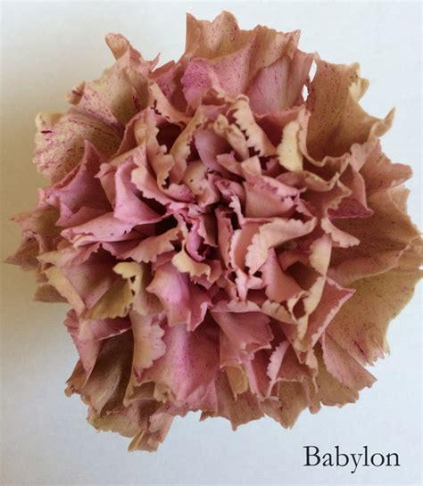 Unique Flower Vase Flower Focus Antique Carnations Flirty Fleurs The