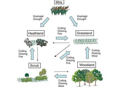 rainforest diagram ecosystem diagrams diagram site