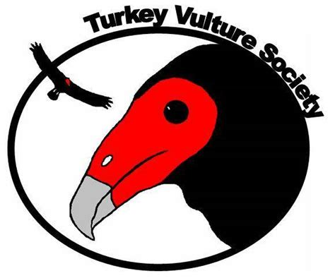 Turkey Vulture Society | Informing about the valuable and ...
