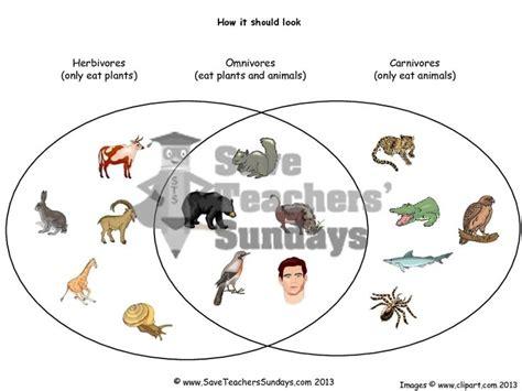 herbivore carnivore omnivore venn diagram the 25 best herbivore carnivore omnivore ideas on pics of dinosaurs animal