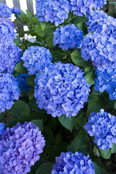 elegant sophisticated muted punch colors rose butter 1000 images about flower garden on pinterest