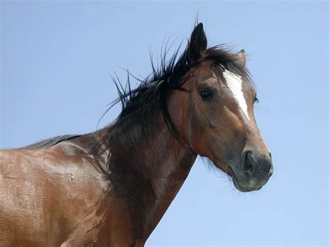 an horse equine horse brown horse
