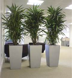 plant for office 10 famous large and small indoor plants the self