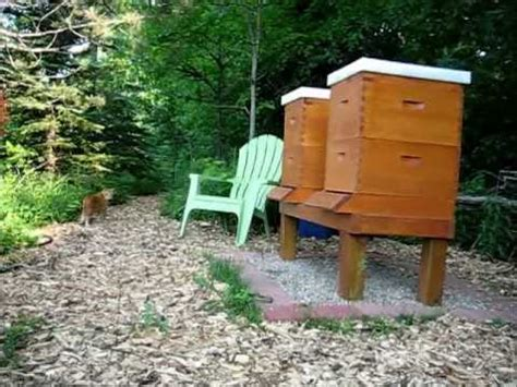 Backyard Beekeeping by Backyard Beekeeping Part 17 S2 E3 Pekoe