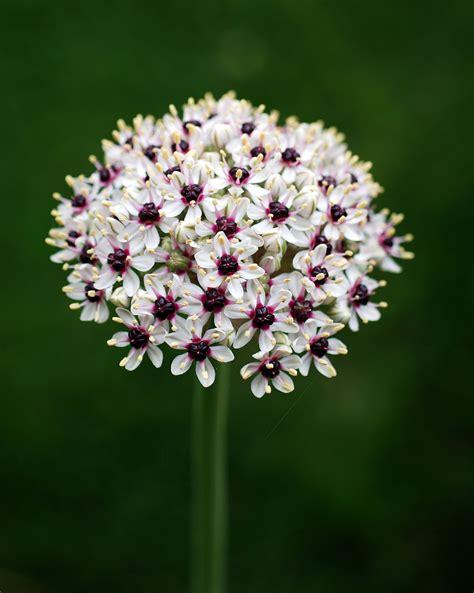 fiore di maggio accordi fiore di maggio fare di una mosca