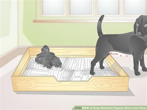 how to keep newborn puppies warm how to keep newborn puppies warm and clean 11 steps