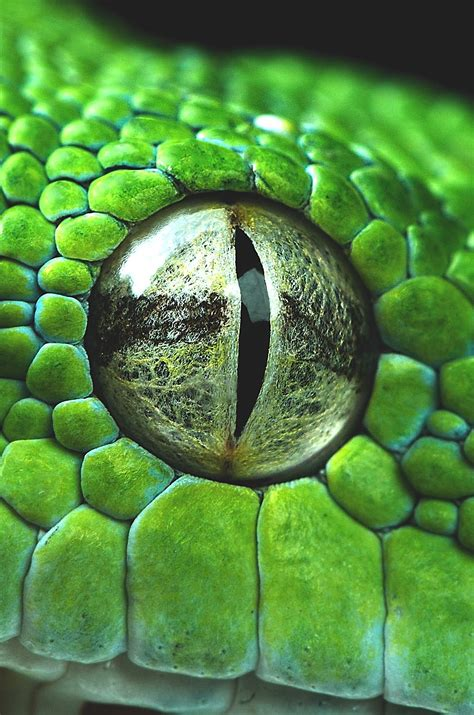 Kaos 3d Snake Eye wavemotions snake eye closeup by henrik vind animal kingdom snake snake
