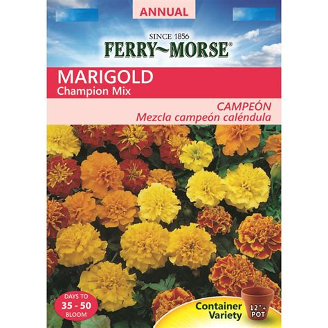 marigolds shade 100 marigolds shade sized marigolds rotary