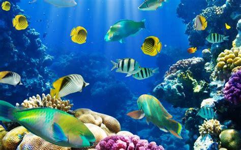 www fish live wallpaper fish wallpaper live hd desktop wallpapers 4k hd