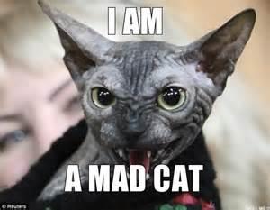 Mad Cat Meme - mad cat memes www imgkid com the image kid has it