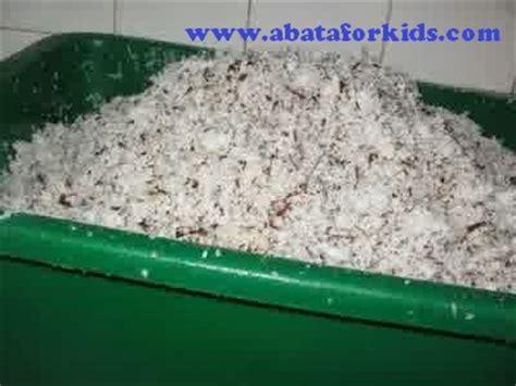 cara membuat minyak kelapa dari santan kara cara fermentasi as kelapa untuk pakan ikan benih ikan