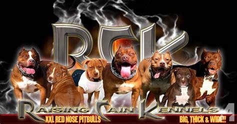puppies for sale wichita falls tx raising cain kennels nose pitbull puppies for sale for sale in wichita falls