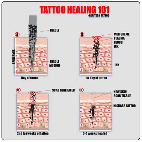 tattoo care after getting it jak se tetov 225 n 237 hoj 237 my salon pinterest tattoo