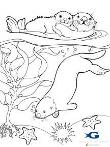 otter coloring pages sea otter awareness week 2012 jen richards