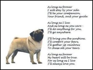 pug quotes sayings pug quotes and sayings quotesgram