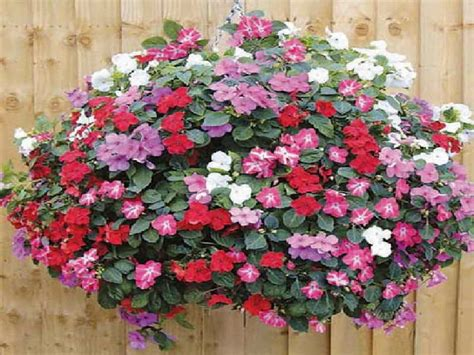 design hanging flower baskets gardening landscaping growing hanging basket flowers