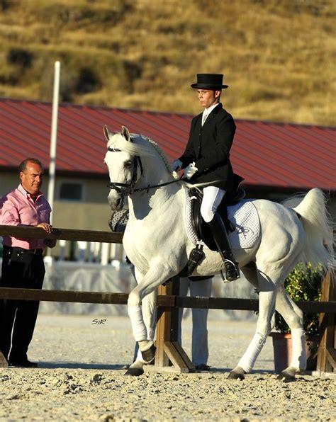 doma de caballos a la introducci 243 n a la doma cl 225 sica con caballos 225 rabes