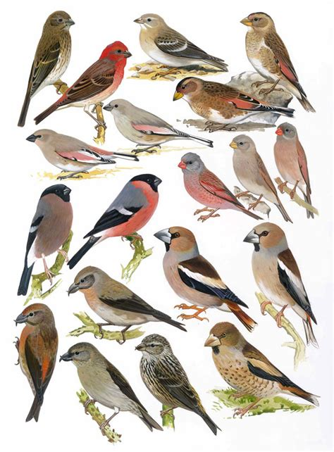 the birds of africa volume vii birds of africa vol vii plate 33 african bird club