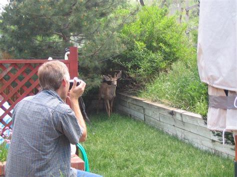 backyard deer feeder backyard deer feeder outdoor goods