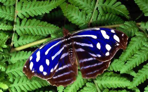 green butterfly wallpaper funny animal blue butterfly sitting on a green leaf hd animals wallpapers
