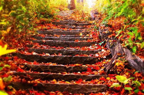 twenty one days of falling in with lupus books explore day of autumn leaves today s homepage