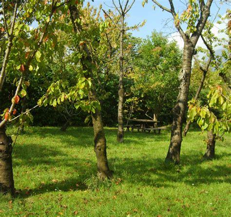 giardino ciliegi agriturismo cania il giardino dei ciliegi benevento