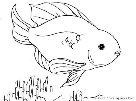 tropical fish coloring pages realistic coloring pages