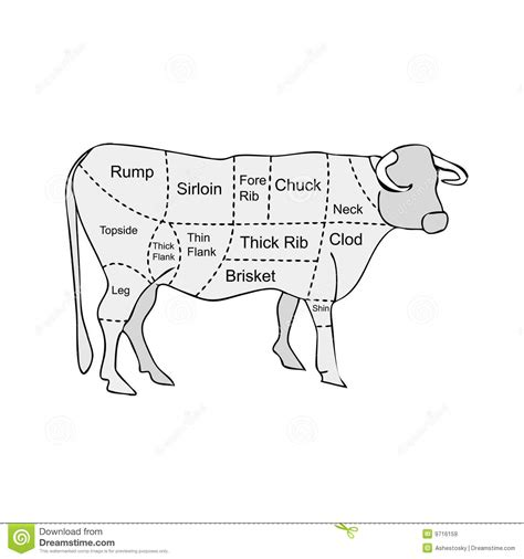 meat sections of a cow butcher meat sections of cow royalty free stock images image 9716159