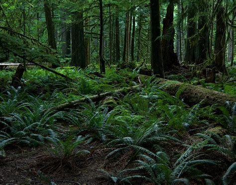 The Forest Floor by Rainforest Floor Flickr Photo