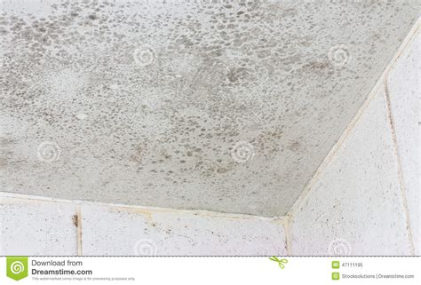 how to clean mould off ceiling in bathroom how to clean a mould bathroom ceiling thedancingparent com