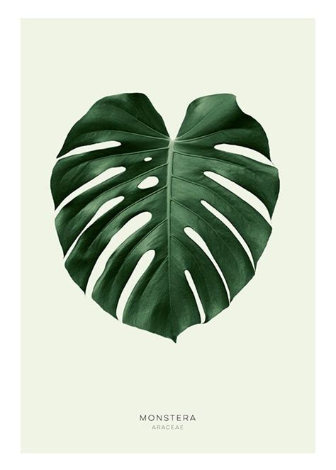 Plant For Bedroom by Botanical Posters Poster Of A Green Monstera Leaf