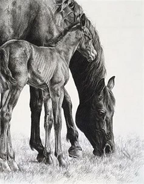 imagenes a blanco y negro de caballos im 225 genes arte pinturas caballos quot poder equino quot dibujos