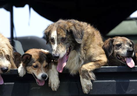 puppies rescued in italy sms rescues dogs abandoned along italy s roads italy magazine