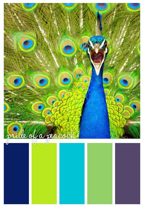 peacock color scheme bedroom pride of a peacock will be my new office color scheme yes