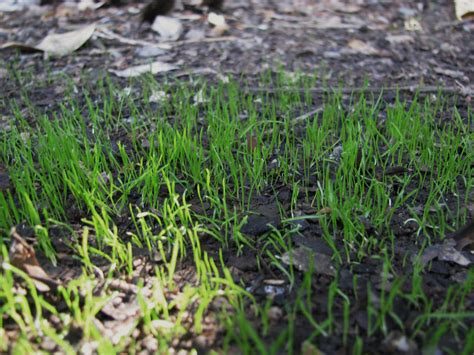 when is the best time to spread grass seed garden guides