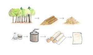 Process Of Paper From Wood - paper production process and hazards world of scrap