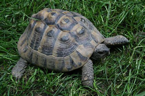 tartarughe da casa come lavare il carapace della tartaruga tutto ze