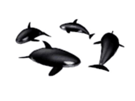 membuat gif transparan ikan paus gif gambar animasi animasi bergerak 100