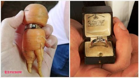 Wedding Ring In Carrot by Lost Engagement Ring Found On Carrot 13 Years Later