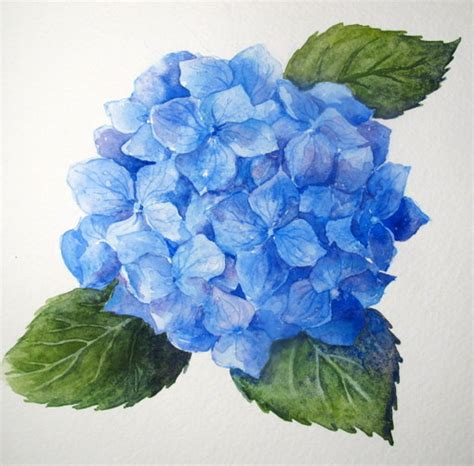 step by step watercolor how to paint a blue hydrangea everyday artist bloglovin