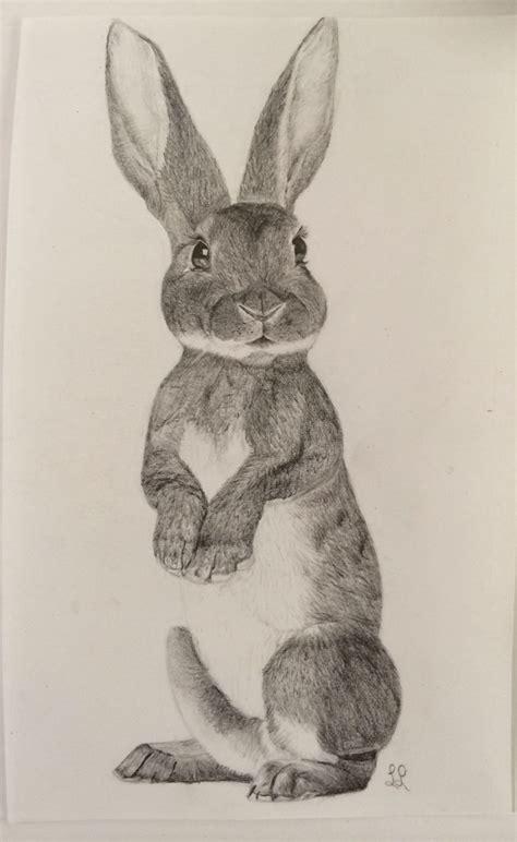 Bild: Hase, Fell, Vegetarismus, Kaninchen von ...