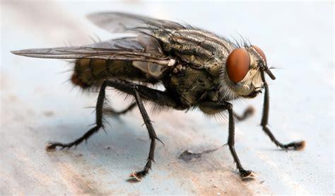 penes variedad hmyz kter 253 m 225 potenci 225 l st 225 t se potravinou mouchy