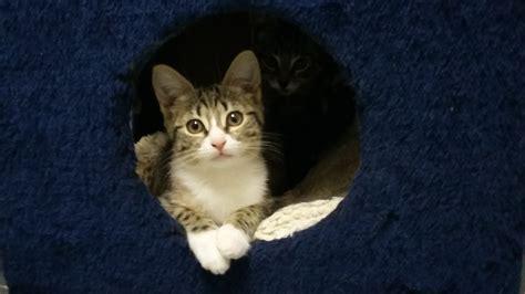 katzen zuhause katzen suchen zuhause