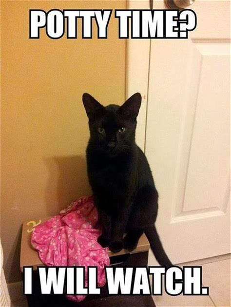 Cat Sitting Meme - 24 funny animal memes and pictures of the day cute