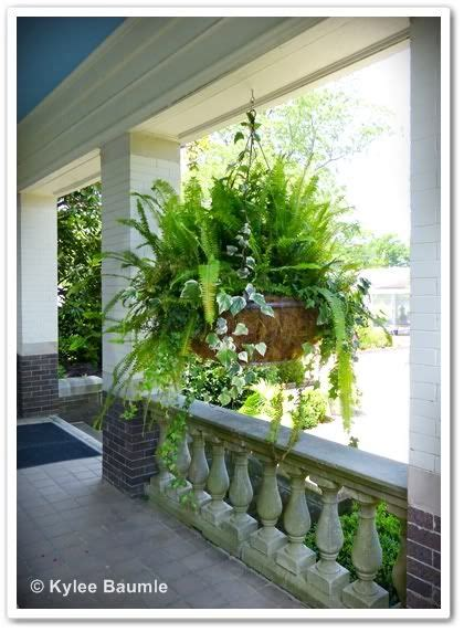 simple hanging container love  ivy added   fern