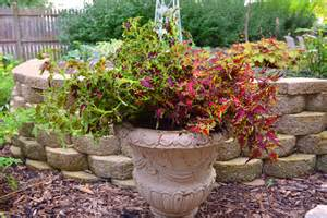 coleus plant container garden design shawna coronado