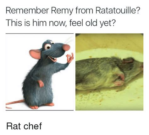 Rat Meme - remember remy from ratatouille this is him now feel old