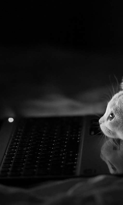 sweet cat mobile phone wallpapers 480x800 hd wallpaper cat reading email wallpaper background hd wallpaper
